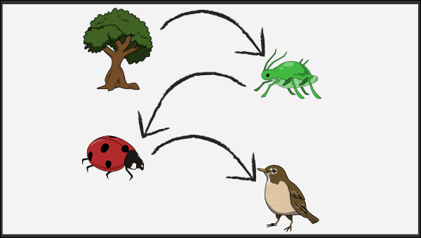 Food Chains Lesson Plans