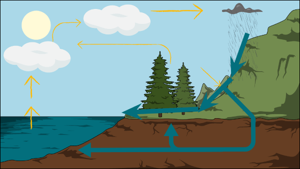 Water Cycle Lesson Plans | The Water Cycle Diagram