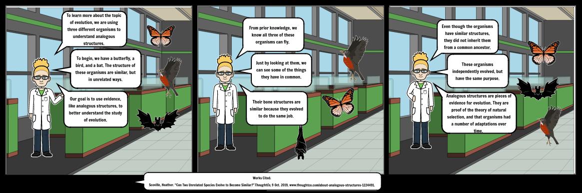 Evolution Storyboard- Evidence