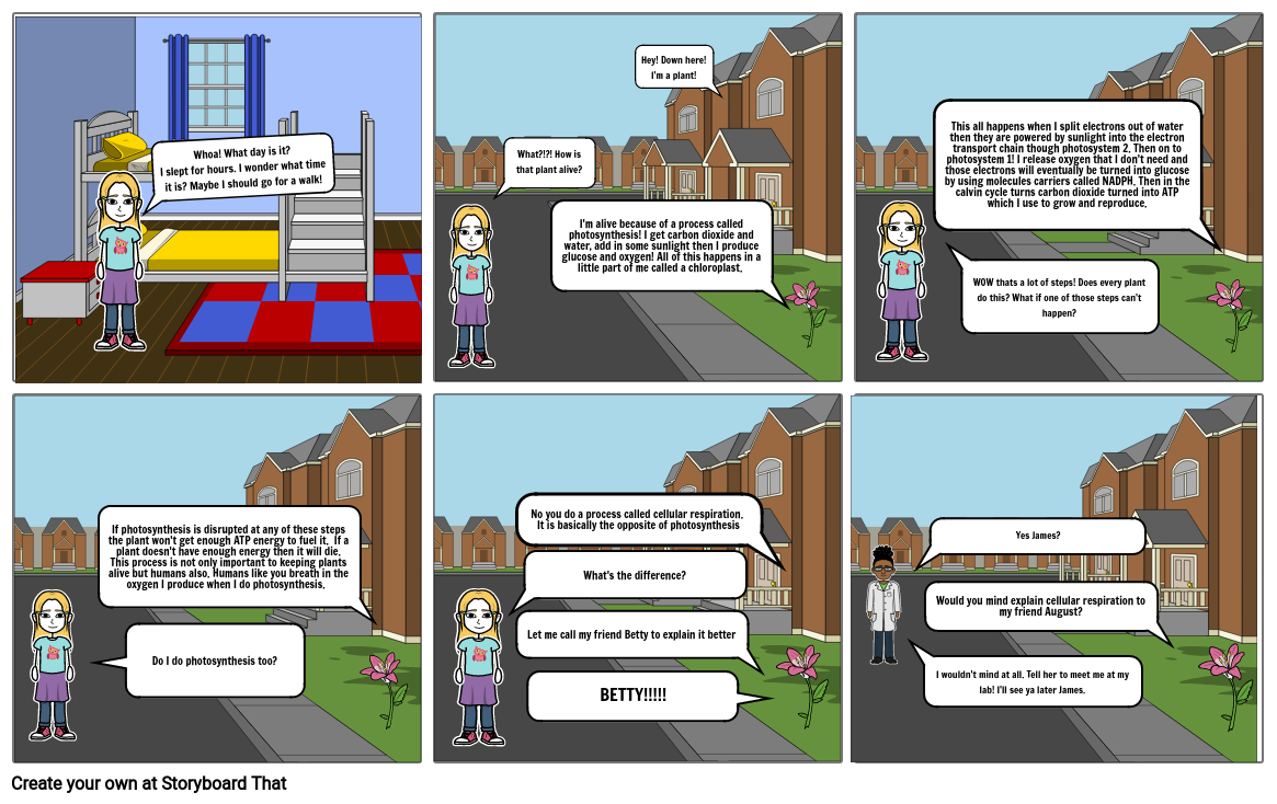 Photosynthesis storyboard
