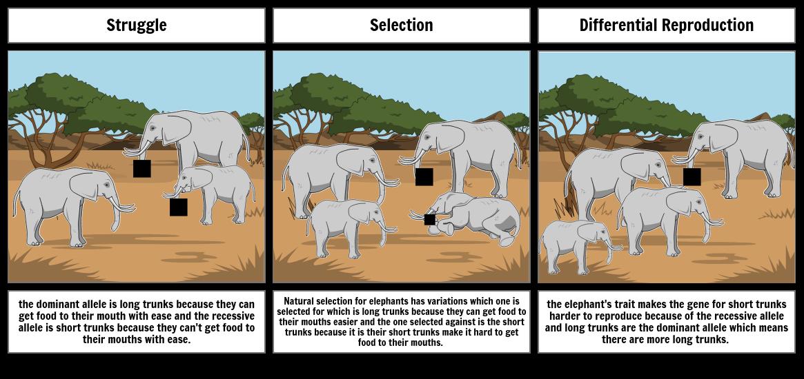Natural Selection Storyboard