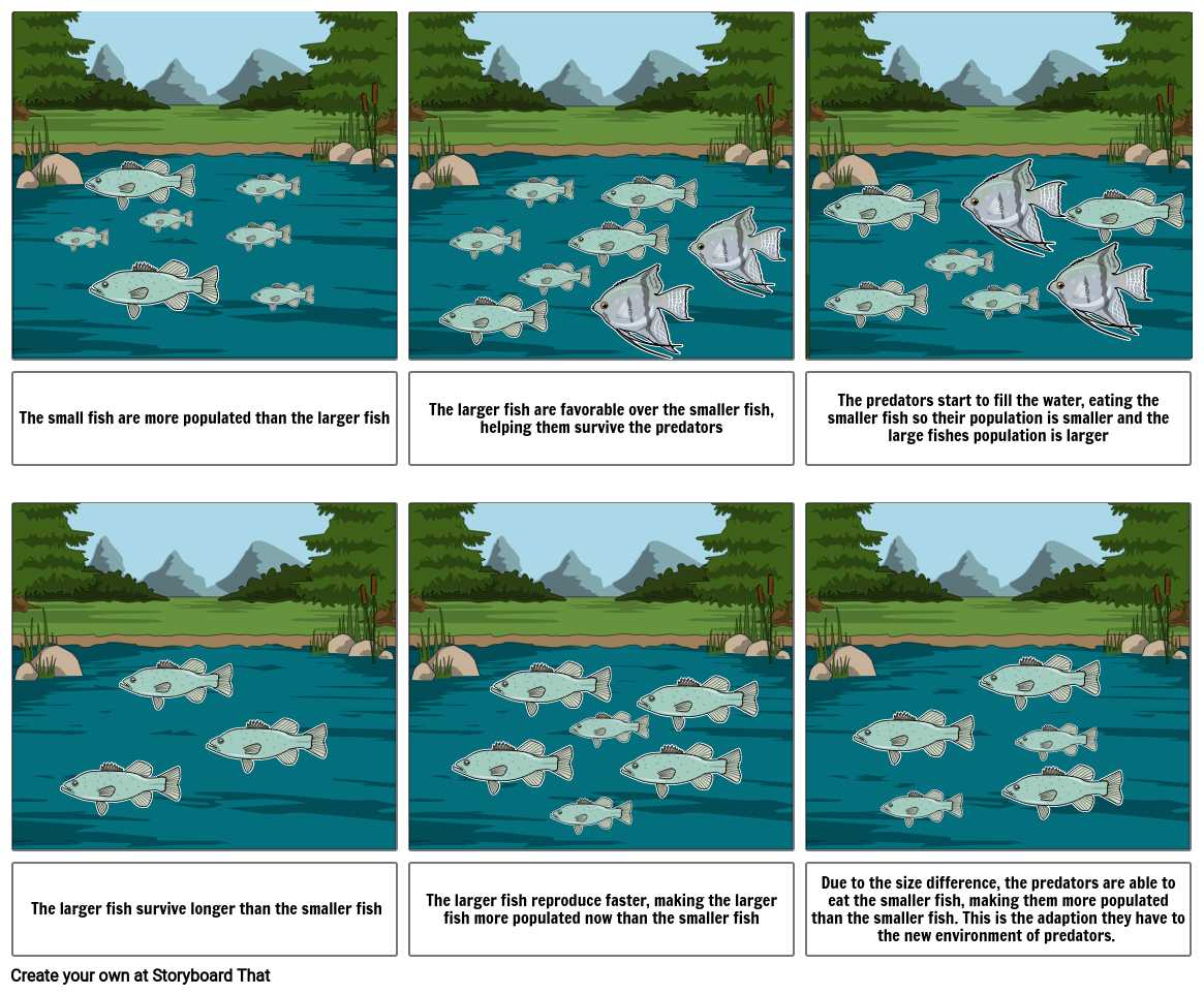 Fish- adaptations and natural selection