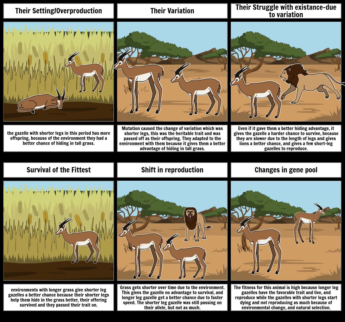 Evolution project 1