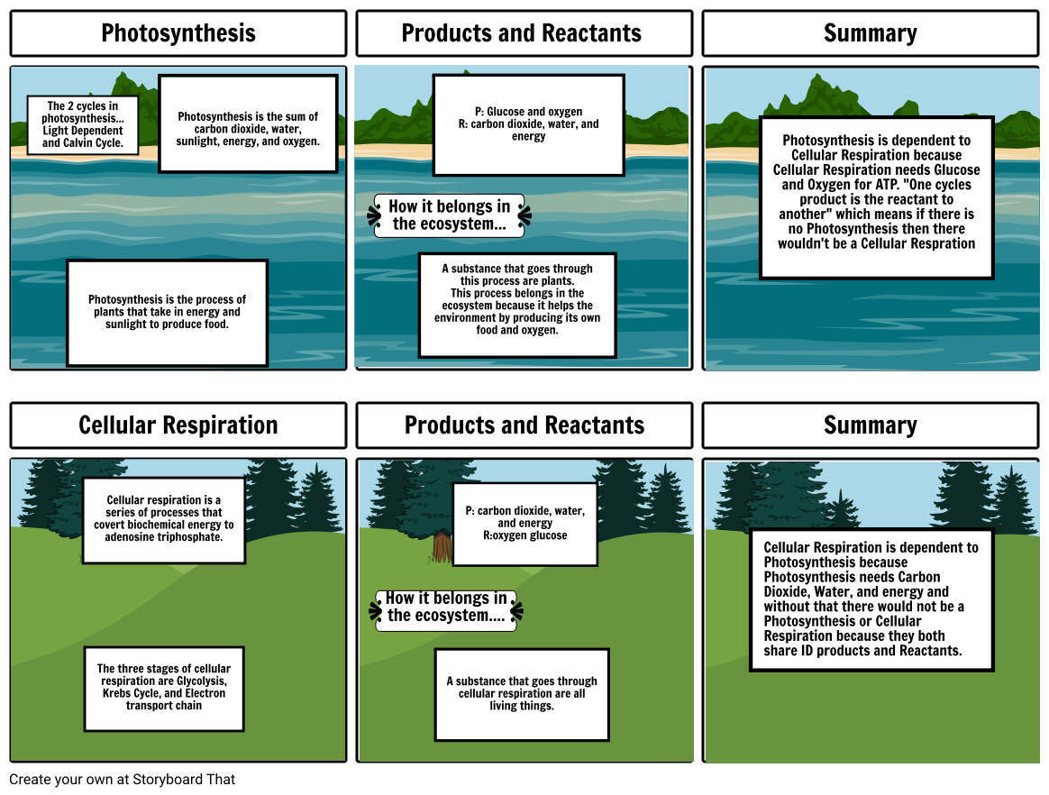 Cell Respiration And Photosynthesis Storyboard