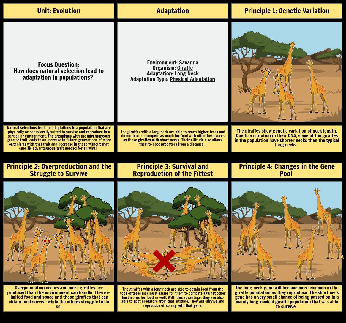 Biology Natural Selection