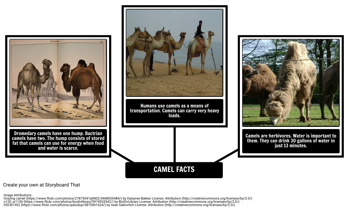 How The Camel Got His Hump Camel Facts Storyboard