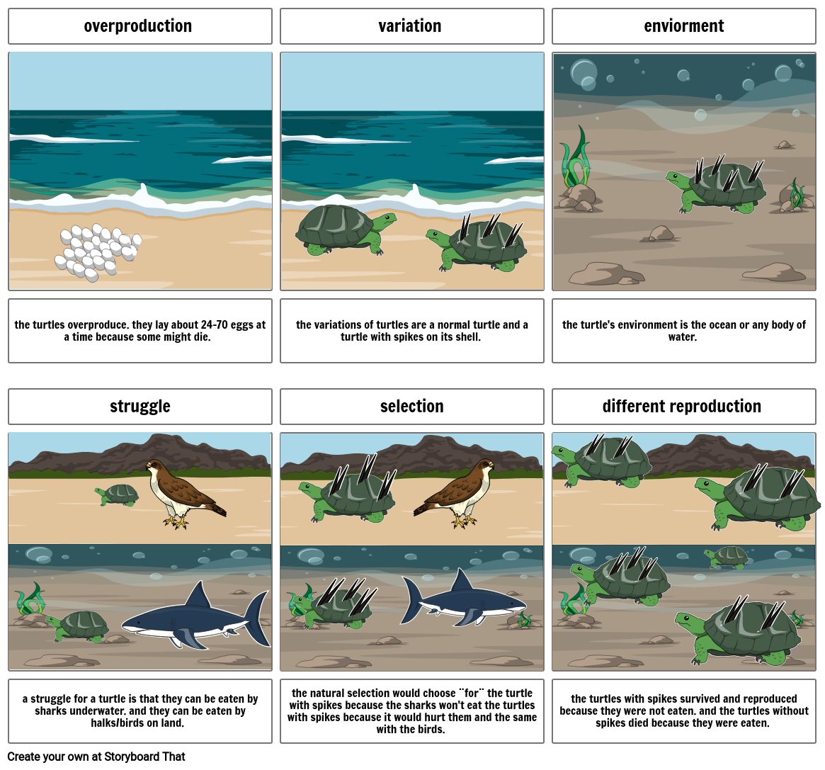 Storyboard project- turtle