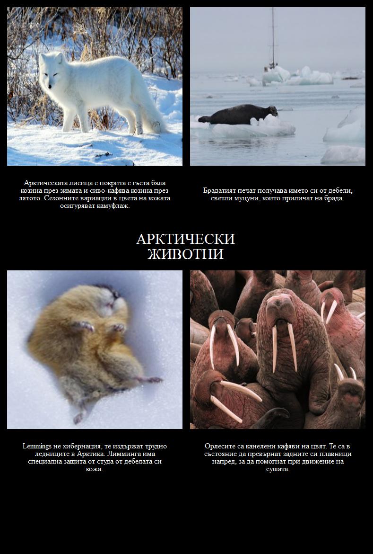 Къде Живеят Полярните Мечки? Арктически Животни
