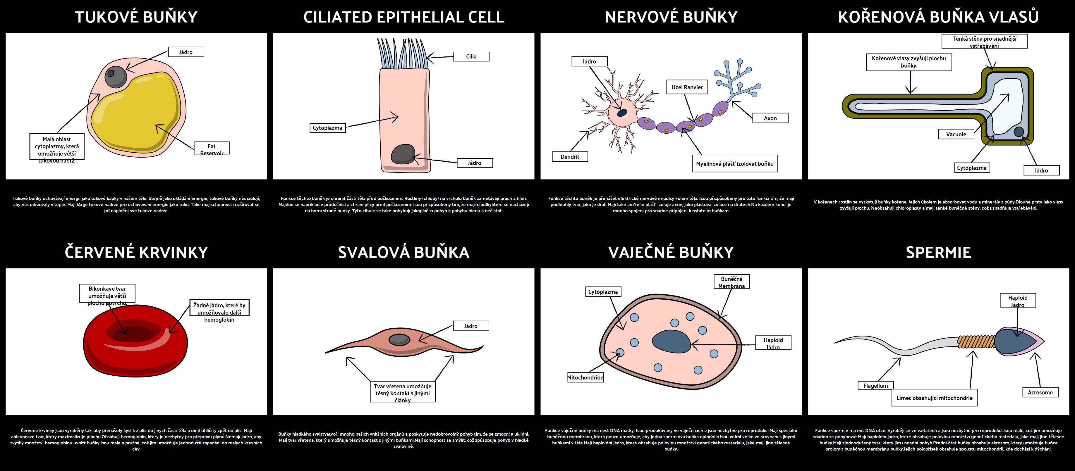 Specializované Buňky