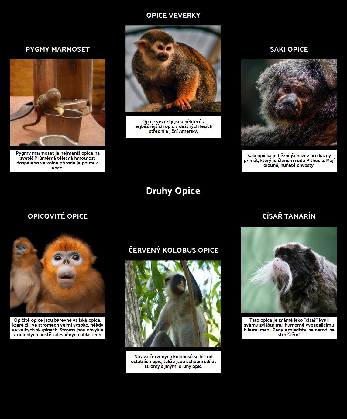 Spider Mapa - Monkeys
