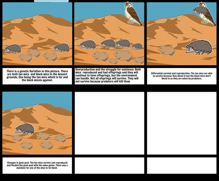 Biology story board