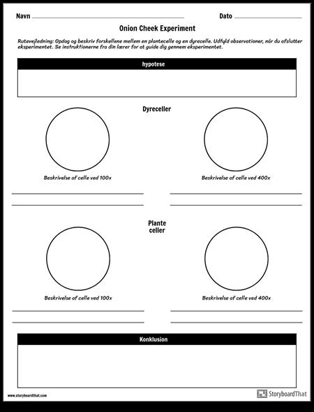 Onion Cheek Experiment Worksheet