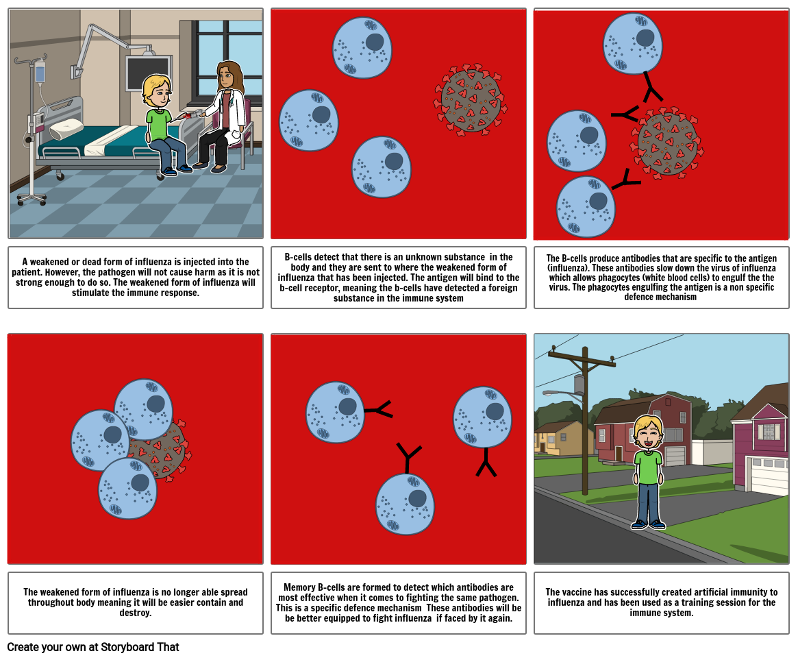 How an Influenza vaccine works