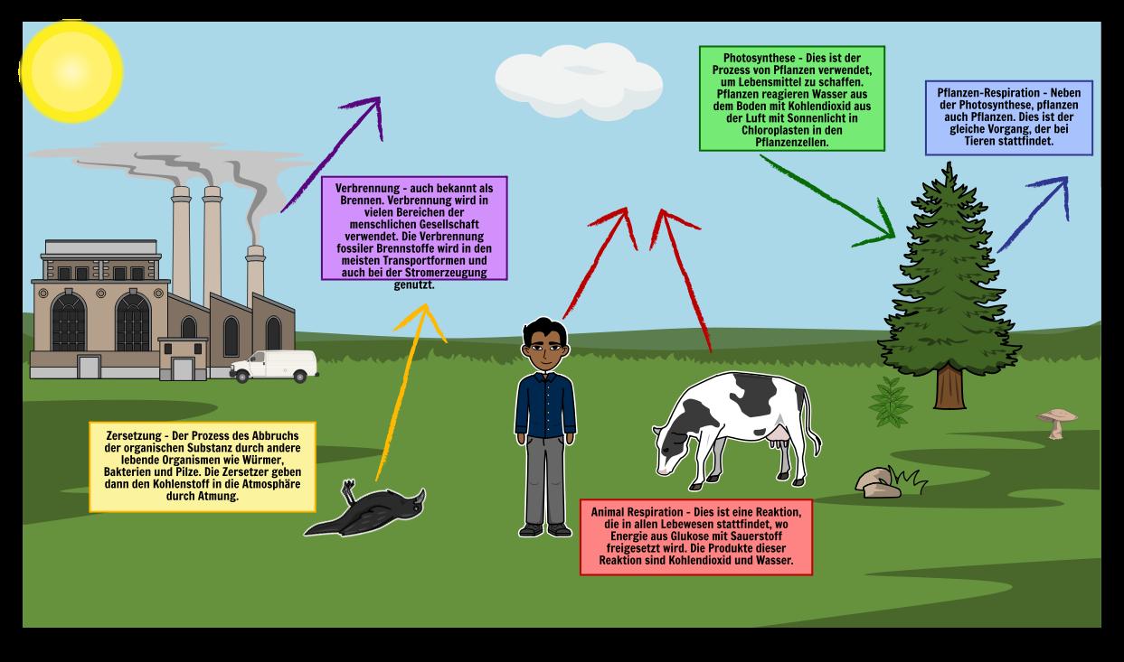 Carbon Cycle Diagram Schritte des Carbon Cycle