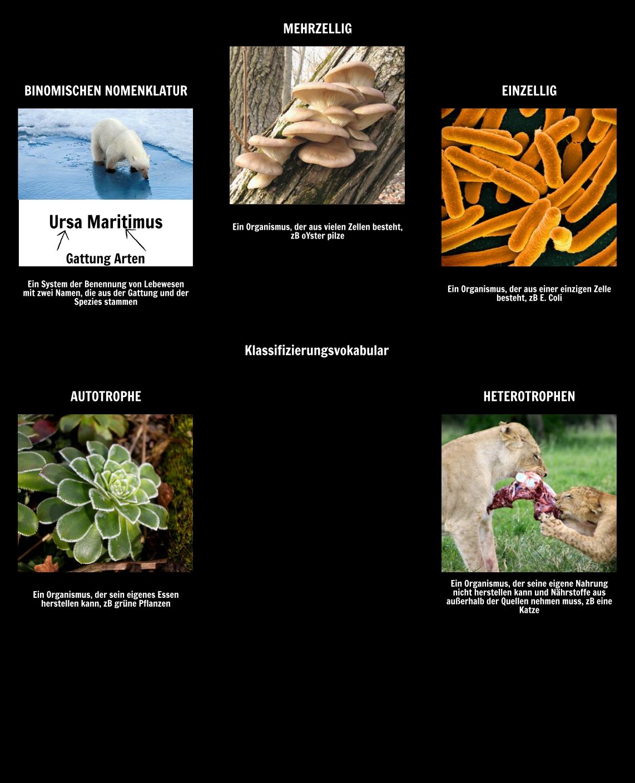 Wissenschaftlicher Name - Klassifikation & Binomialnomenklatur