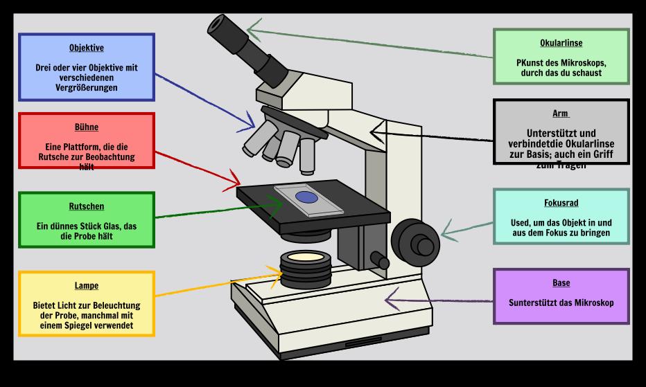 Basische Zellorganellen | Plant and Animal Cells Unterrichtspläne