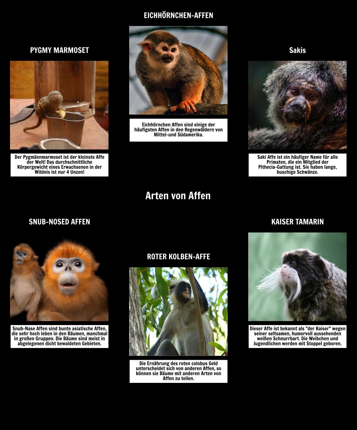 Spinnenkarte - Affen
