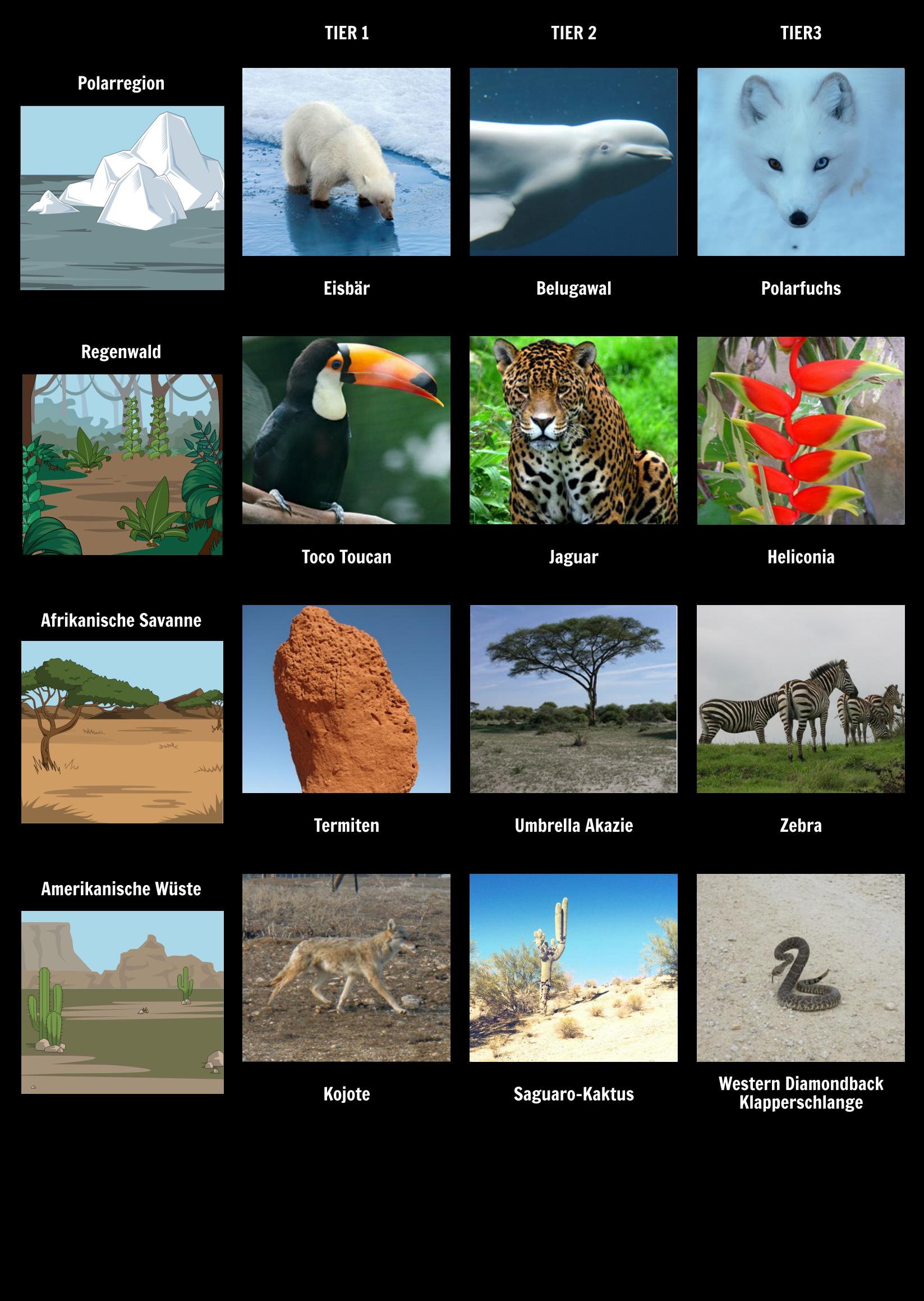 Tieranpassungen in Verschiedenen Tierhabitaten | Animal Adaptation ...
