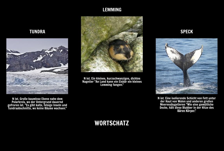 wo leben eisb ren aufrechtzuerhalten arktische tiere eisb r tatsachen. Black Bedroom Furniture Sets. Home Design Ideas