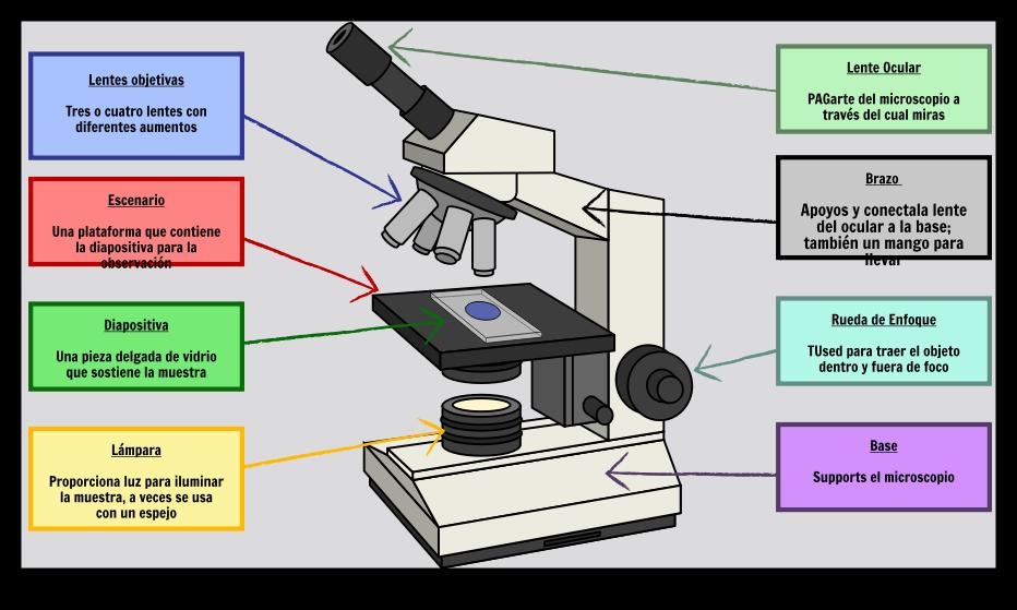 Organelos Celulares Básicos   Planes de Lección de Células Vegetales ...
