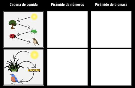 Pirámide de Números y Biomasa