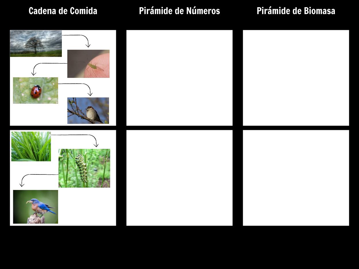 Ejemplos de la Cadena Alimentaria | Definición y Actividades de la ...