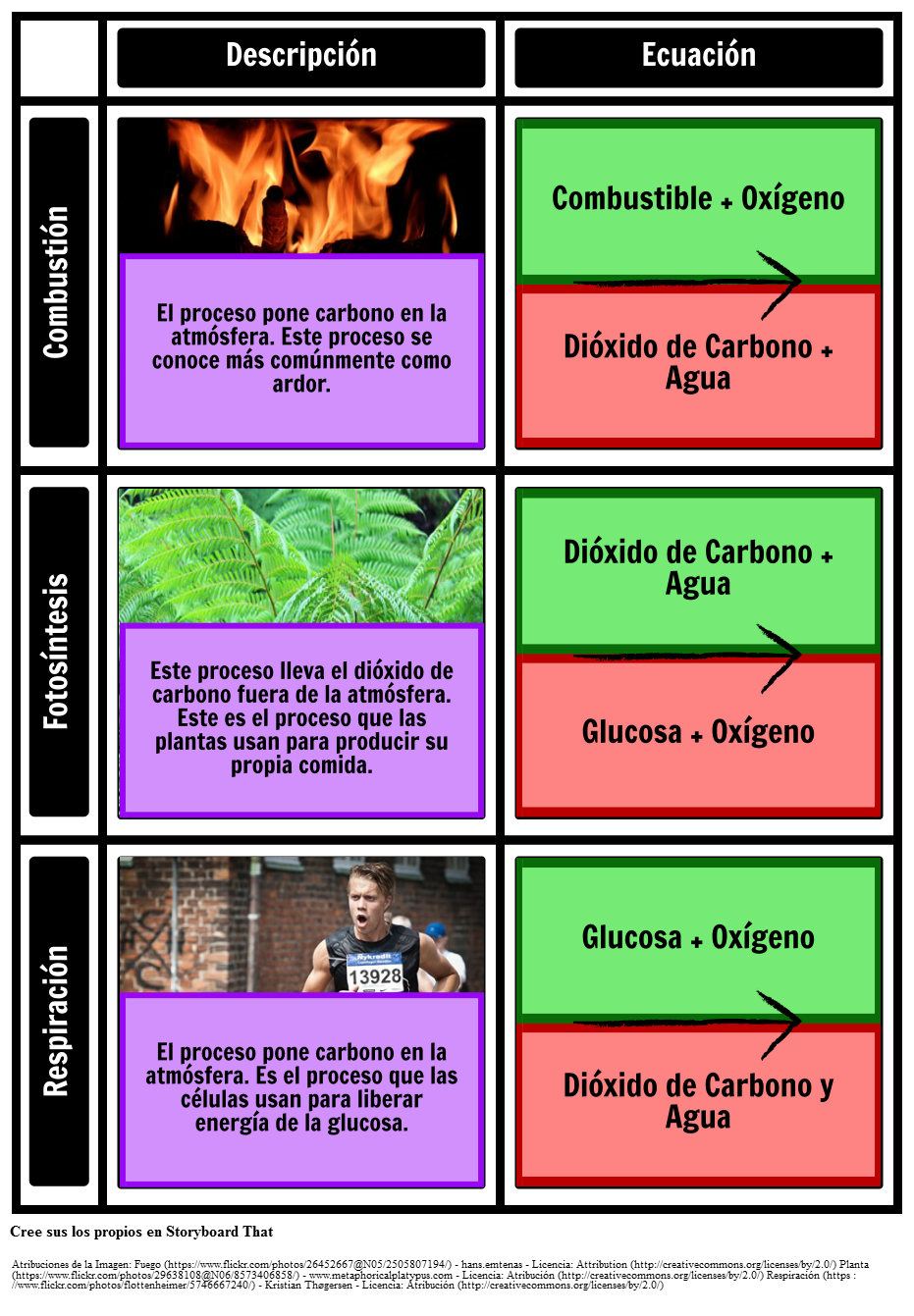 Procesos en la Cuadrícula del Ciclo del Carbono