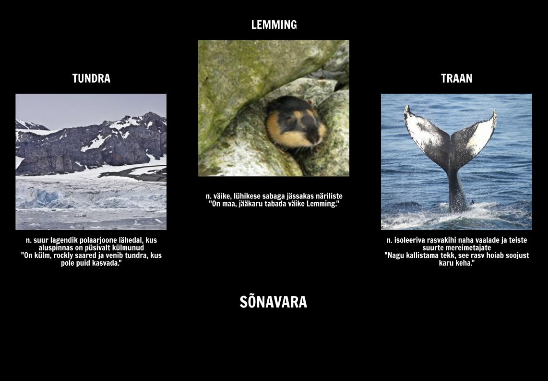 Kust Polar Bears Live? Sõnavara