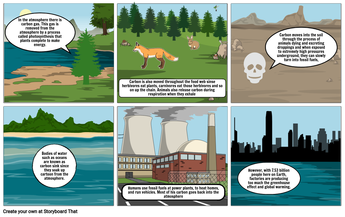 Carbon cycle storyboard