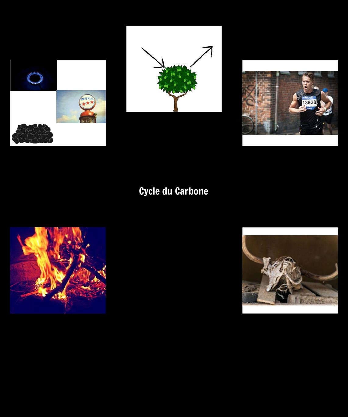 Le Vocabulaire du Cycle du Carbone
