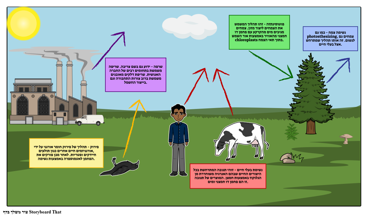 תרשים פחמן מחזור