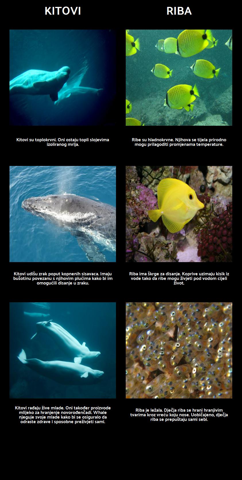Amos i Boris - Morski Sisavci i Riba