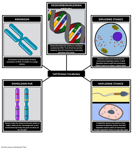 Cell Division Vocabulary