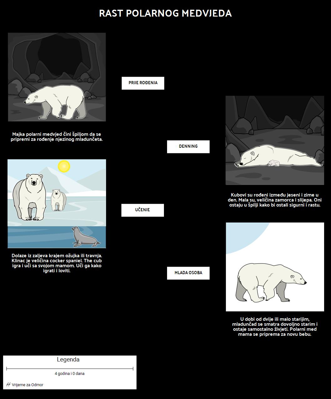 Gdje Žive Polarni Medvjedi? Rast Polarnog Medvjeda