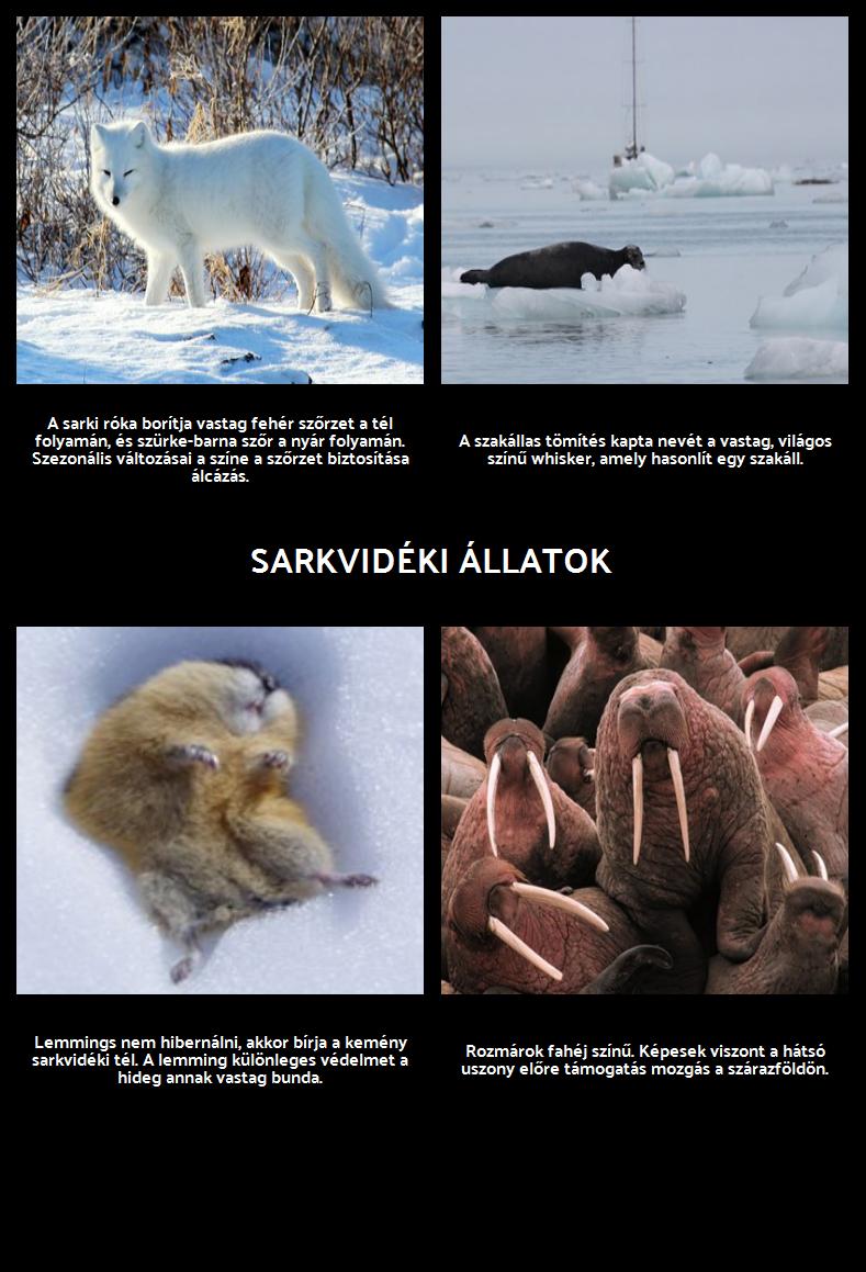 Hol Polar Bears Élő? Arctic Állatok