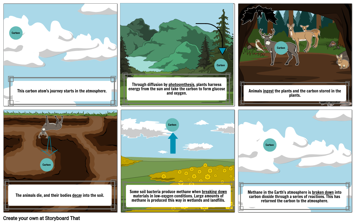 The History of a Carbon Cycle