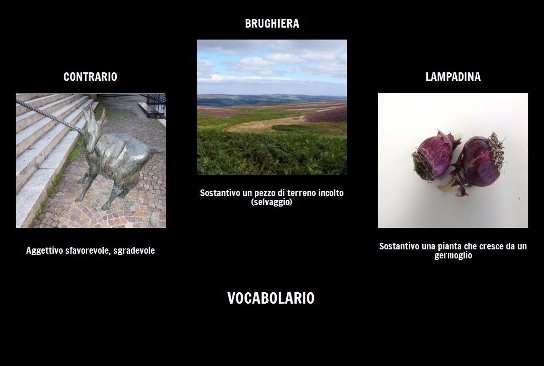 Il Vocabolario Segreto Del Giardino Storyboard