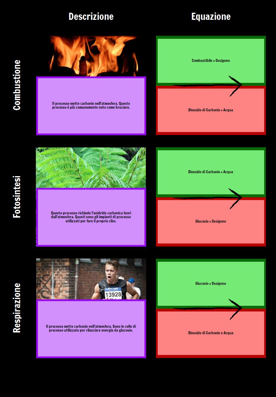 Processi Nella Griglia del Ciclo del Carbonio