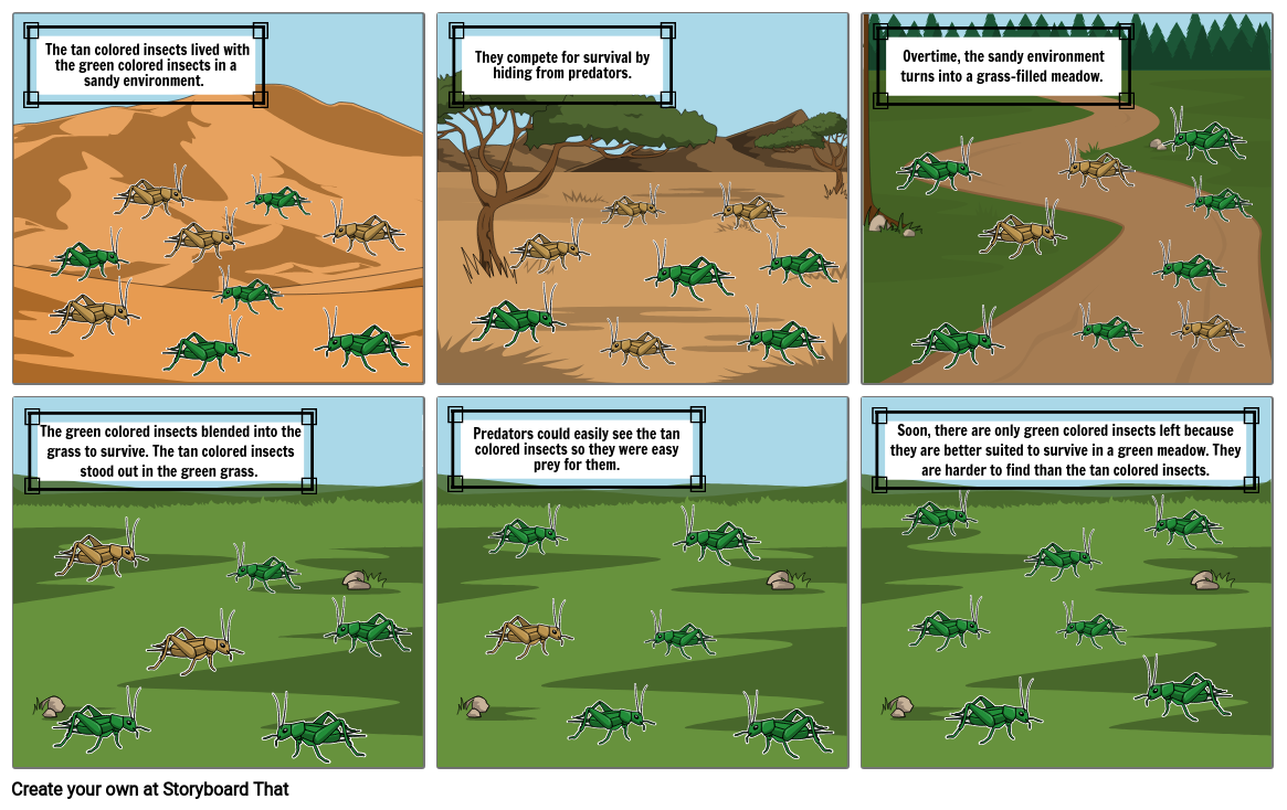 Natural Selection with Insects