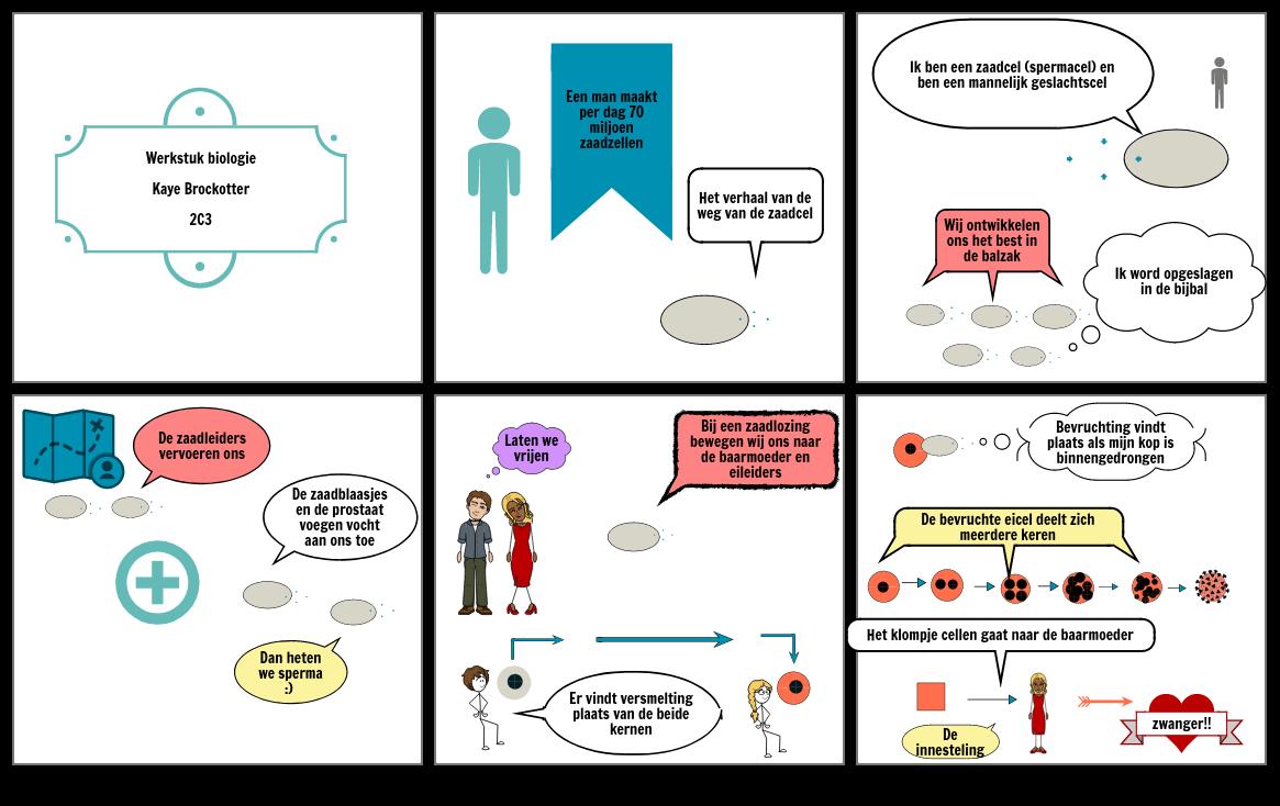 Biologie Verhaal van een zaadcel