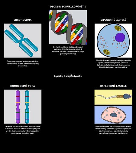 Ląstelių Dalių Žodynėlis