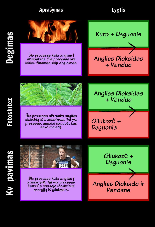 Procesų Anglies Ciklą Tinklelis