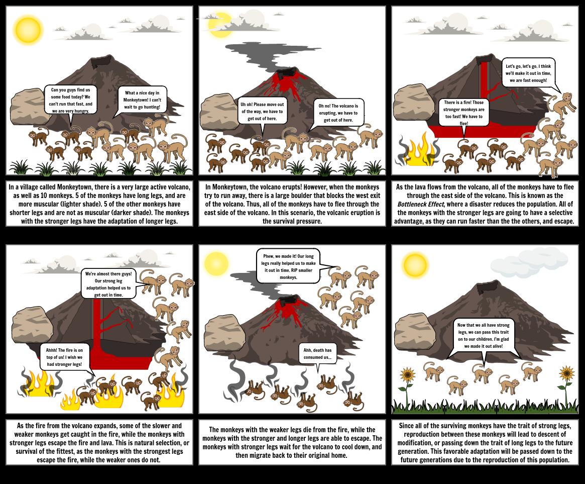 Evolution Storyboard- Luke Freed