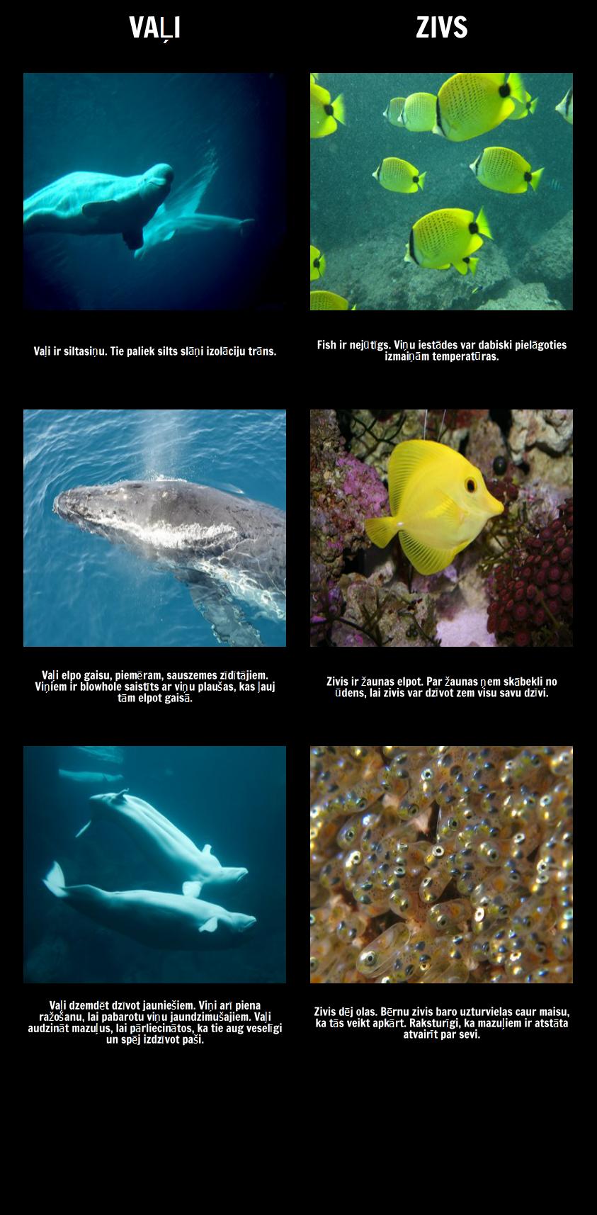 Amos un Boriss - Jūras Zīdītāji vs Fish