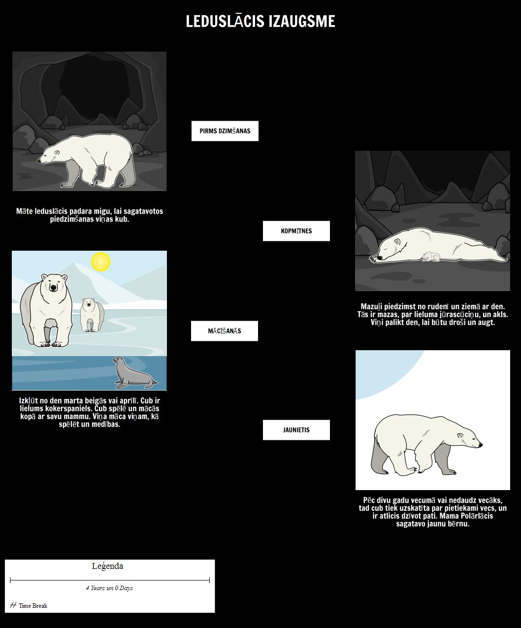 Kur Polar Bears Live? Polar Bear Izaugsme