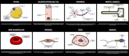 Gespecialiseerde Cellen