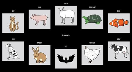 Visual Vocabulary: Animals