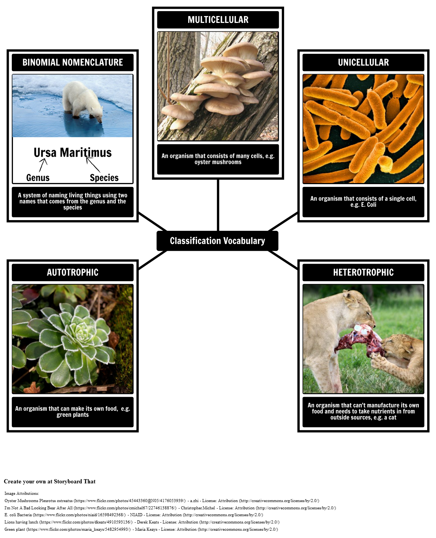 Classification Vocabulary
