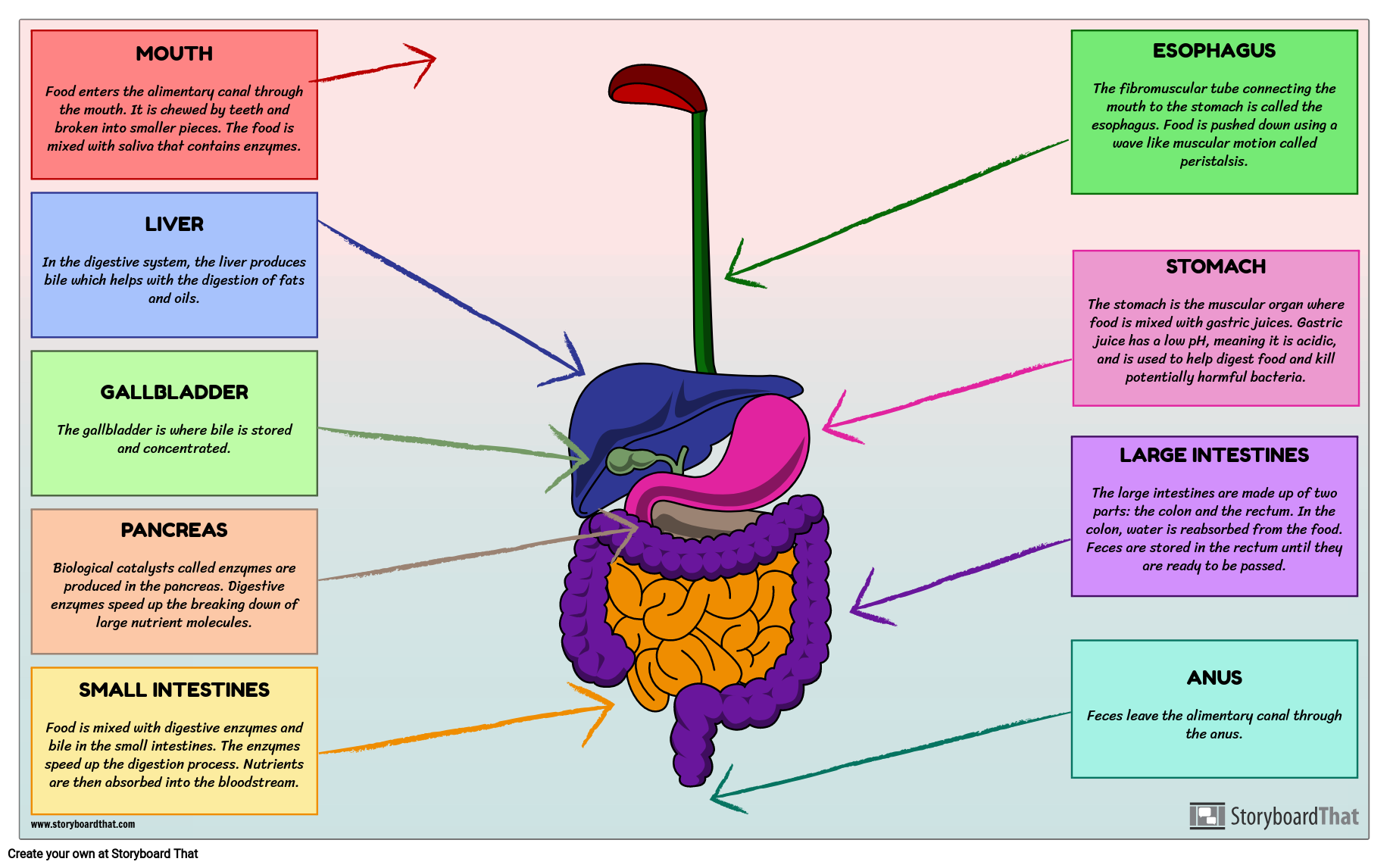 Organs In The Digestive System Diagram Science Lesson Plans
