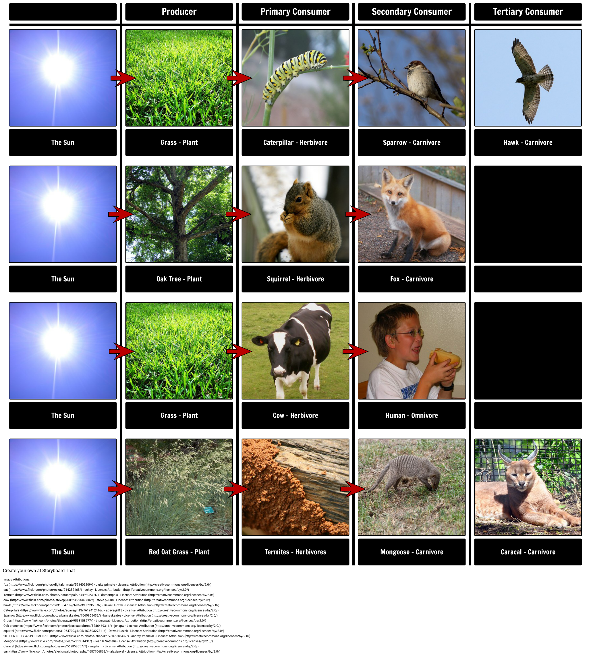 Food Chain & Food Web Examples, Definition & Activities